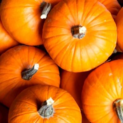 Тыква – полезный продукт, герой Хэллоуина и элемент цветочного букета