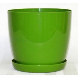 Магнолия зеленый,210 мм