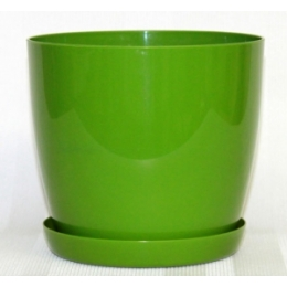 Магнолия зеленый,180 мм