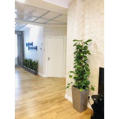 Озеленение инновационного пространства
